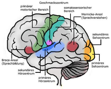 kwaku ananse neues aus der hirnforschung. Black Bedroom Furniture Sets. Home Design Ideas